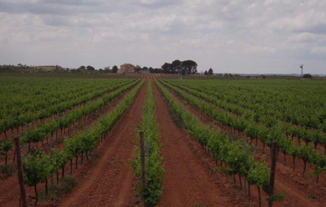 Valencia Vineyard for wine lovers